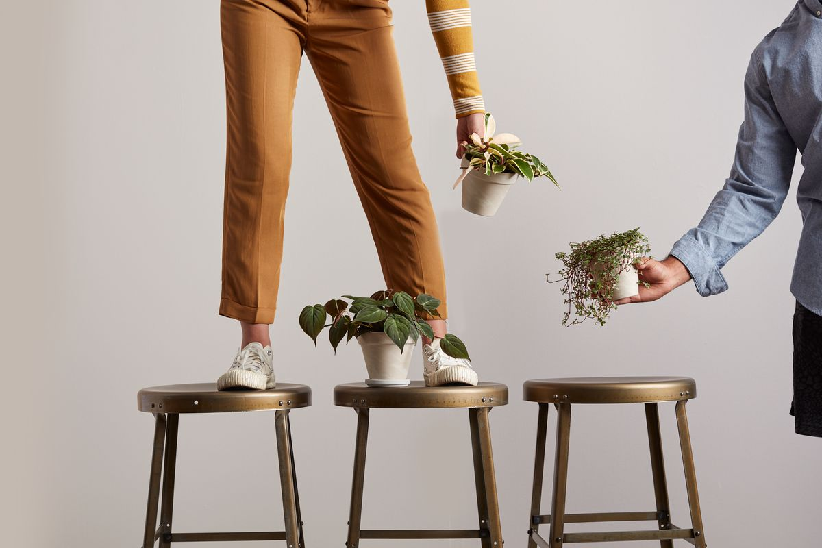Woman standing on stools, one of which holds a potted plant.