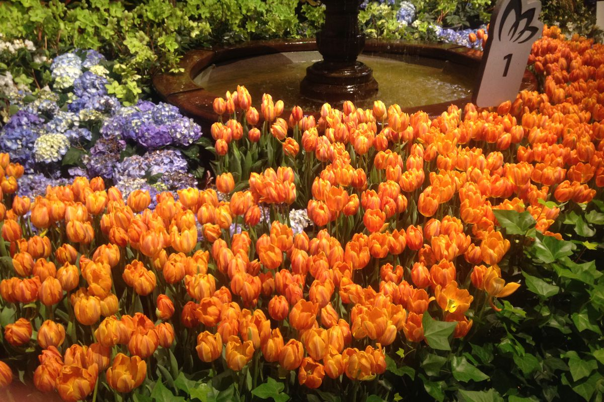 Cold Snow Move In As Flower And Garden Show Wraps Up Chicago