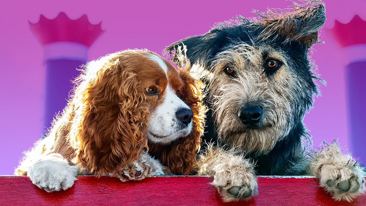 """Two starring dogs from Disney's live action remake of """"The Lady and the Tramp"""""""