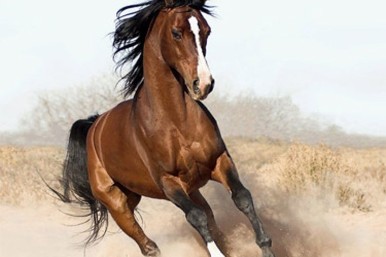 @horse_ebooks Is A Human Performance  The Verge