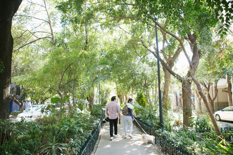 A couple strolls down Condesa's tree-lined streets with a dog