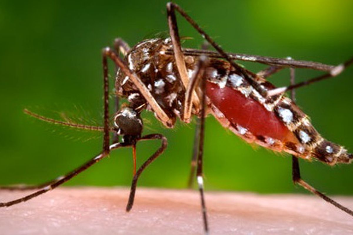 A fifth mosquito sample has tested positive for West Nile virus in Will County.