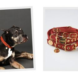 """For your favorite canine, the <a href=""""http://www.freepeople.com/valentine-canvas-collar"""">Valentine Canvas Collar</a>, $42 at Free People"""