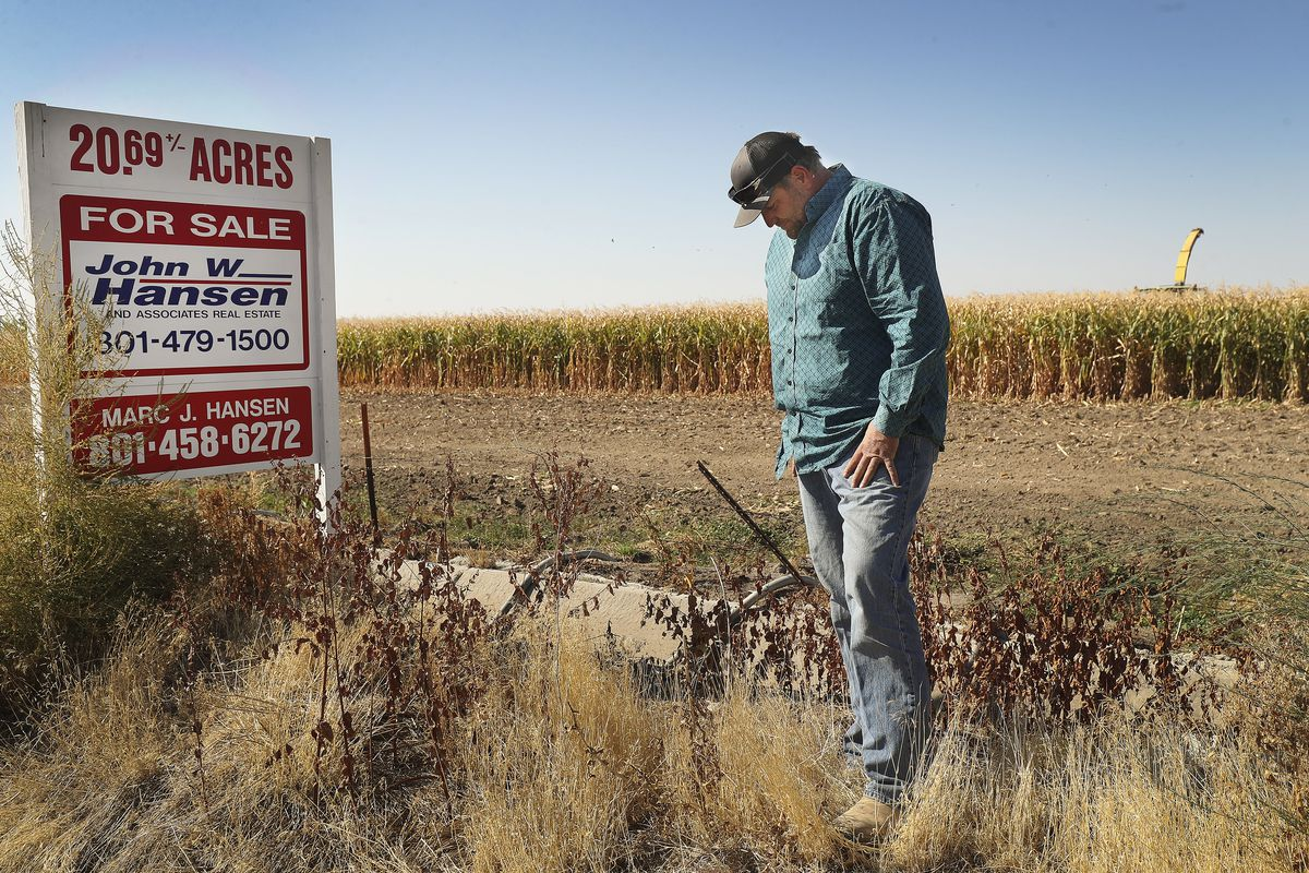 Ron Gibson, a seventh-generation Ogden dairy farmer, talks about the sale of land he leases and uses to grow corn for his cattle in Hooper, Weber County, on Friday, Oct. 9, 2020.Even before COVID-19 issues decimated dairy farmers, Gibson's wife talked him into starting a corn maze, and earlier this year he decided to use hundreds of acres of his land in Ogden to grow onions, tomatoes and potatoes in an effort to adapt and survive so his son can follow him into farming.