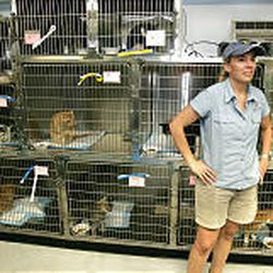 Julie Castle relaxes near the 30 cats that her pets agency brought to Utah from Picayune, La.