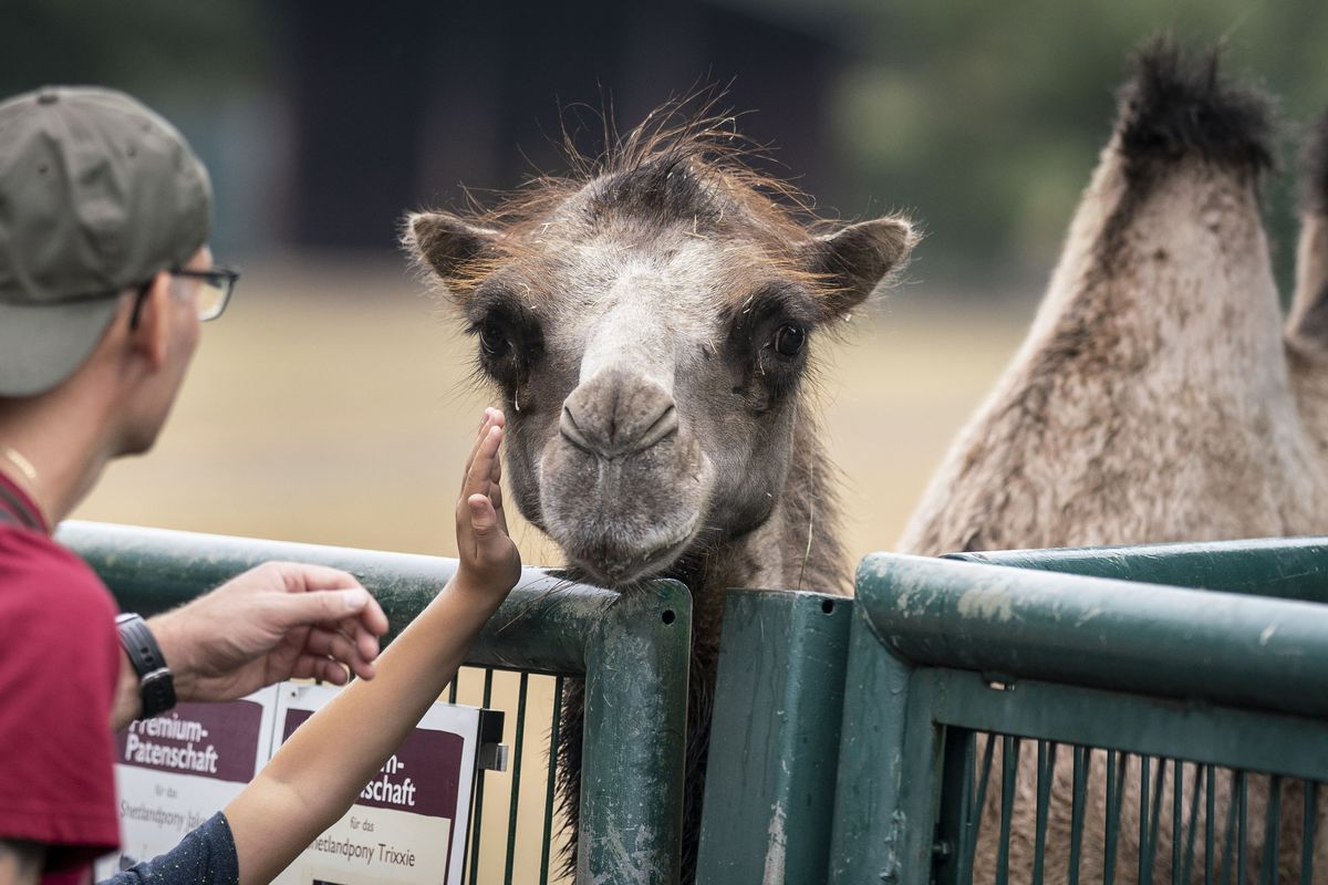 Study: The Germans and their zoos