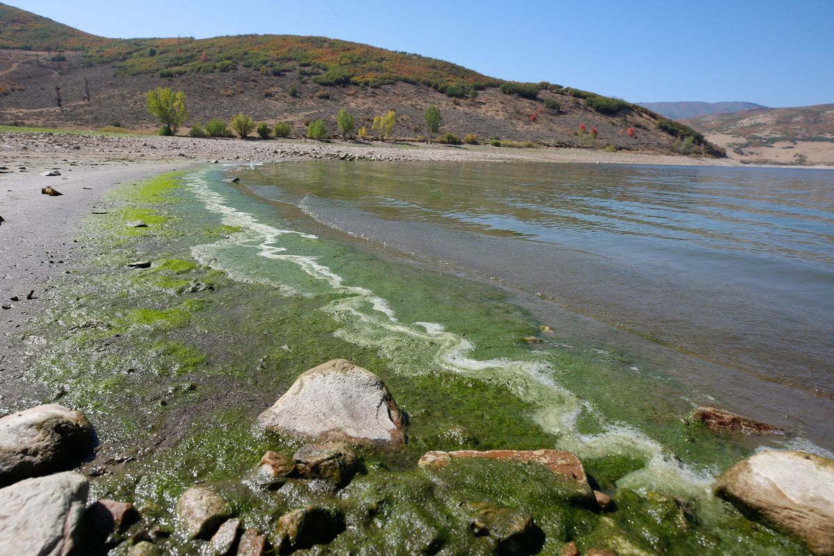 Algae is pictured on the shore at Deer Creek Reservoir in Wallsburg, Wasatch County, on Monday, Sept. 21, 2020.