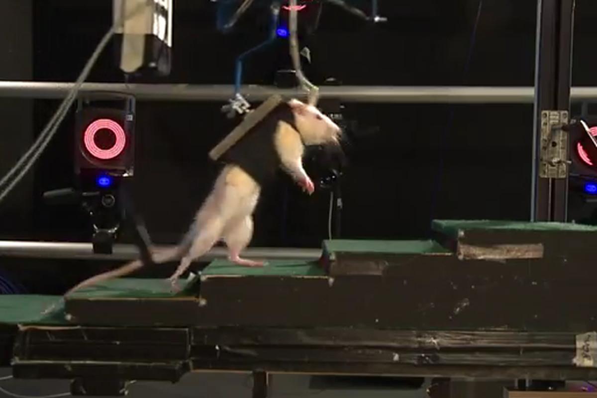 Robot rat harness