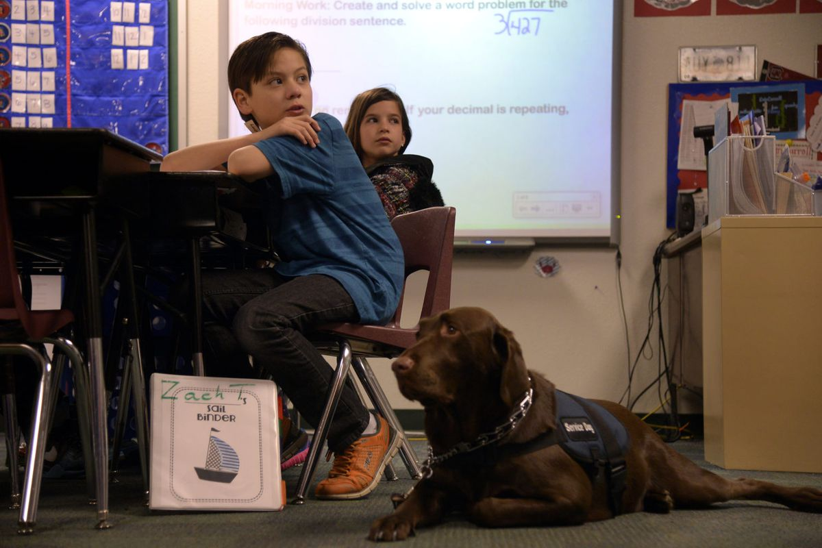 Zachary Tucker, a 5th grader in Colorado Springs, answers questions in class with his service dog, Clyde, in 2014. Clyde helps Zach with his Aspergers syndrome, a high functioning form of autism. (Photo By Joe Amon/The Denver Post via Getty Images)