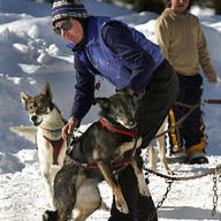 Musher Sue Morgan of Richmond works with dogs Falcon, left, and Tizzy at the Seeley Lake, Mont., trailhead. Morgan will join more than 100 teams in the grueling 1,150-mile Iditarod Trail Sled Dog Race.
