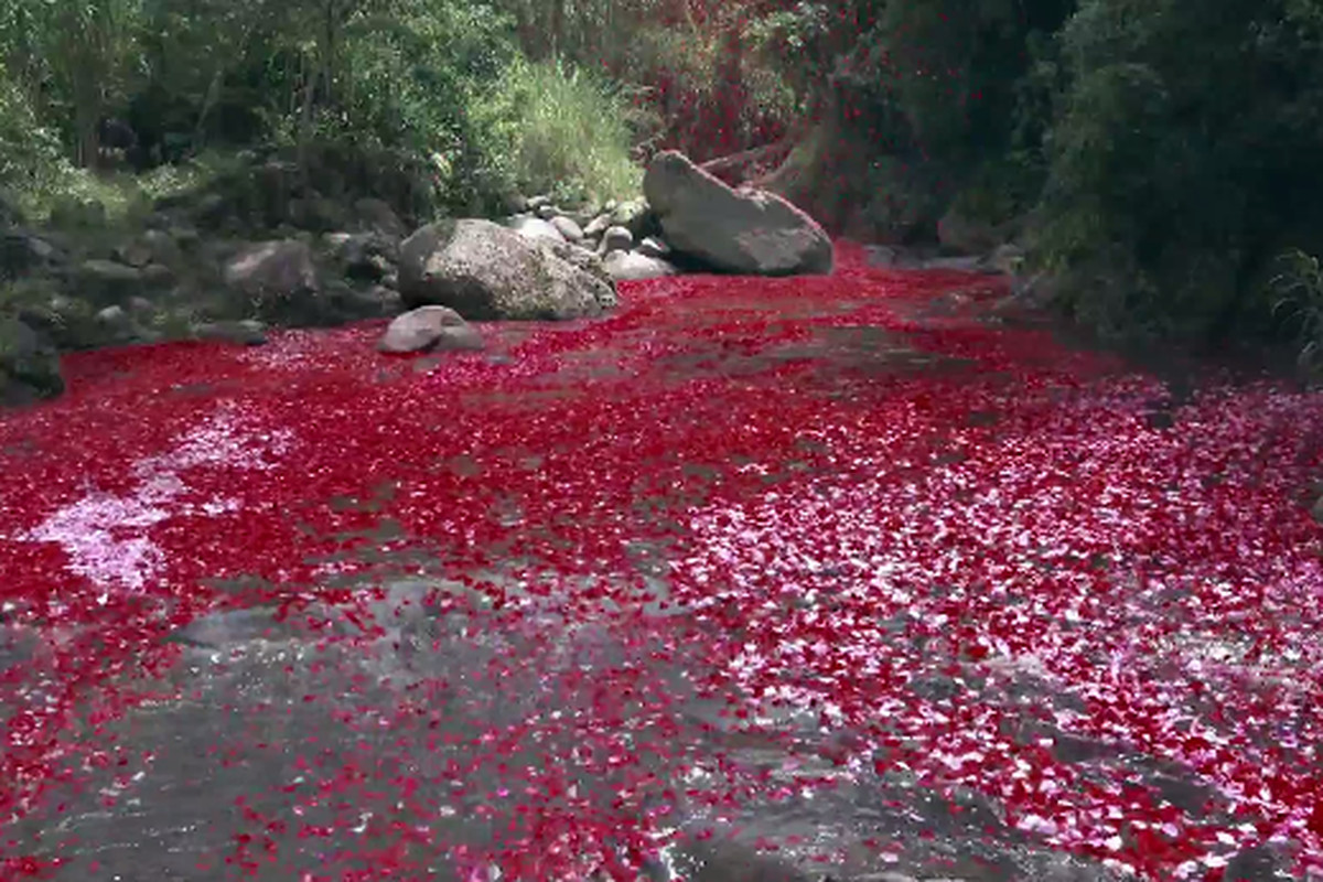 Sony Launches 8 Million Flower Petals From A Volcano To Promote Its