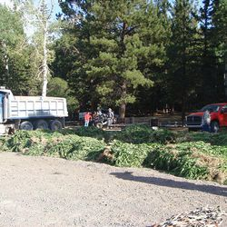 Officials work to dismantle a marijuana operation in Wayne County. About 20,000 plants were destroyed.