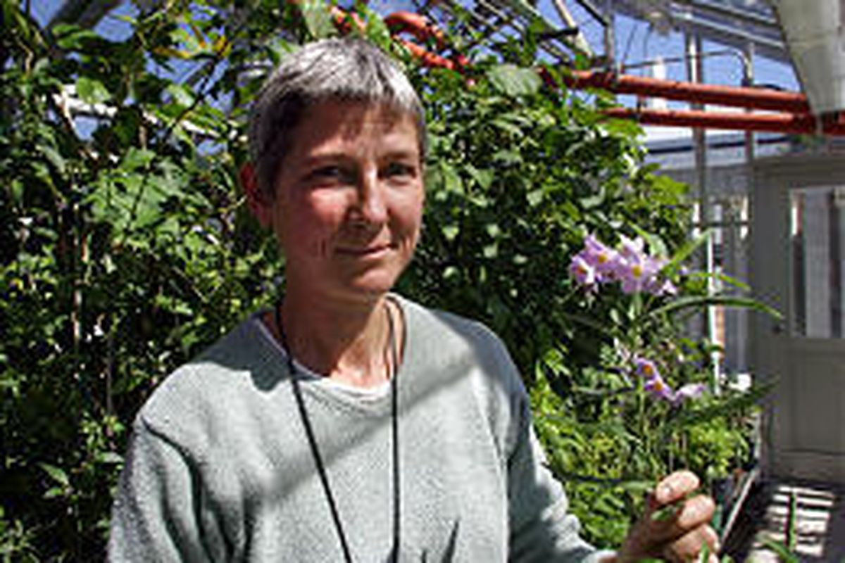 Lynn Bohs and three fellow scientists are using a $4 million National Science Foundation grant to document 1,500 species of the Solanum genus.