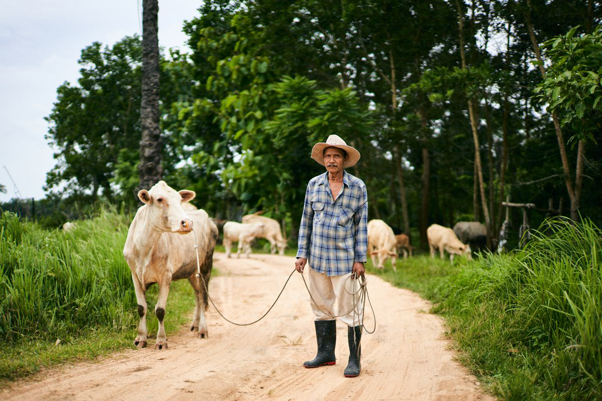 A man in a plaid shirt and hat standing standing a cow in the middle of a dirt road