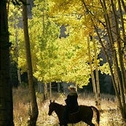 A horseman rides through the backlit trees in the Uinta Mountains.