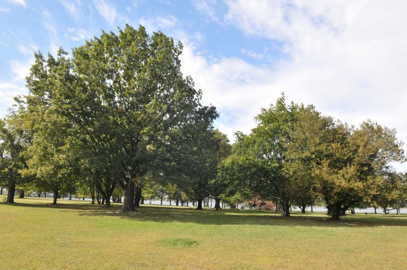 A park. In the foreground is a green lawn. In the distance are multiple trees.