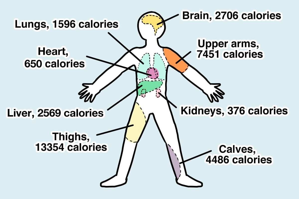 How Many Calories Is That Human A Nutritional Guide For Prehistoric