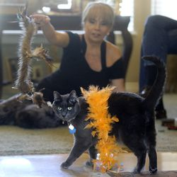Bonney Thom plays with her rescued cat Bleau le Beare at home in Draper on Monday, July 13, 2020. Salt Lake and Washington counties are not accepting stray cats unless they're hurt or obviously abandoned.