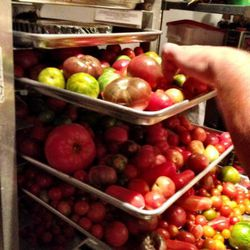 Some of the 170lbs per week of heirloom tomatoes