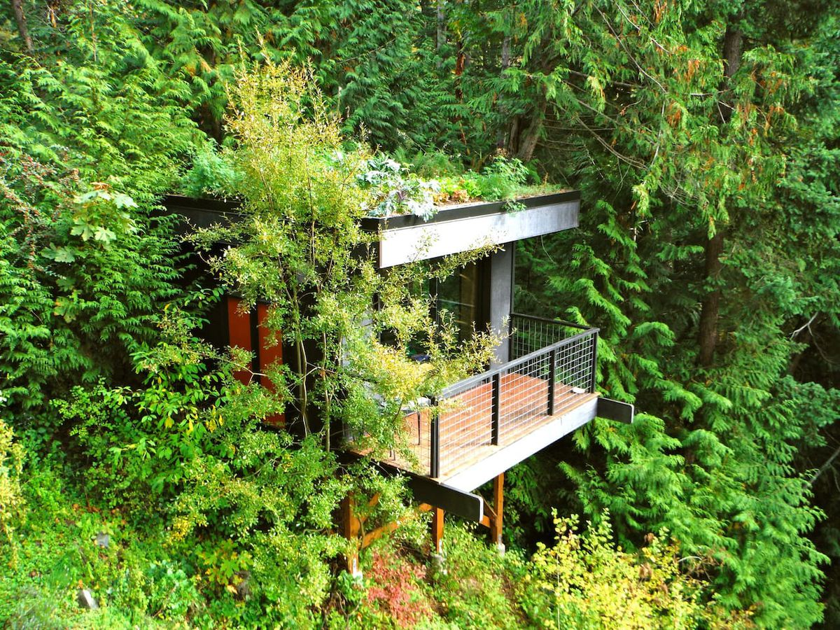 A tiny, boxy, modern house with a deck peeks out from a thick forest of evergreen trees.
