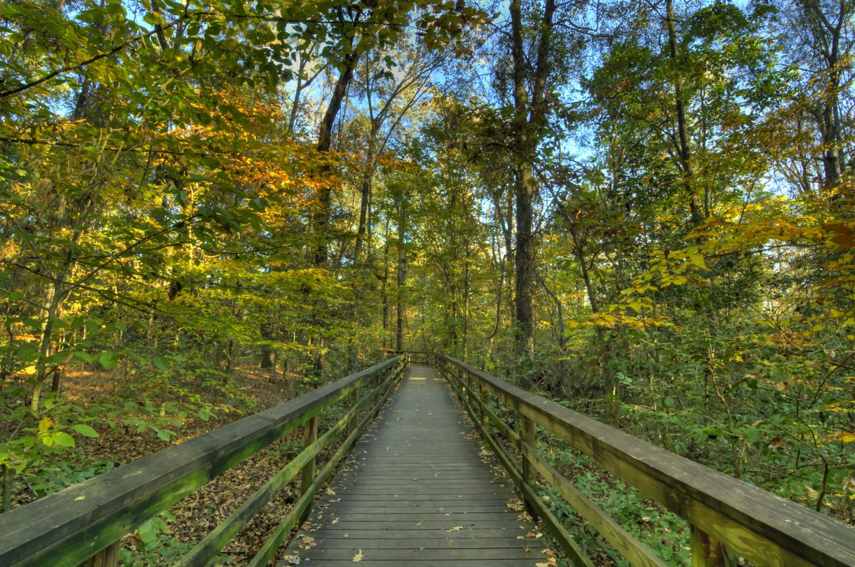 A wooden boardwalk through autumn leaves.