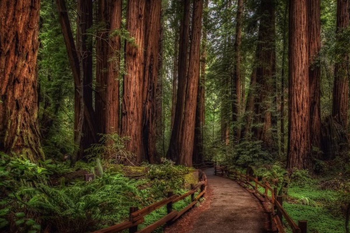 """Photo via <a href=""""http://sosh.com/mill-valley/muir-woods/night-hike-through-the-redwoods/a/dbaH/?ref=new_homepage"""">Sosh</a>."""
