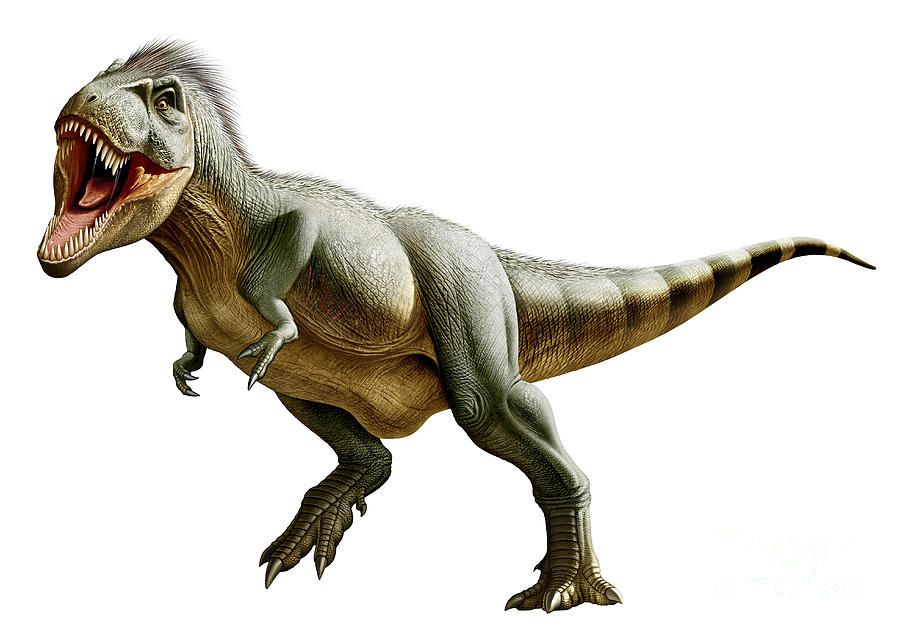 Evidence in soft the tissue hardens dinosaur fossils Young