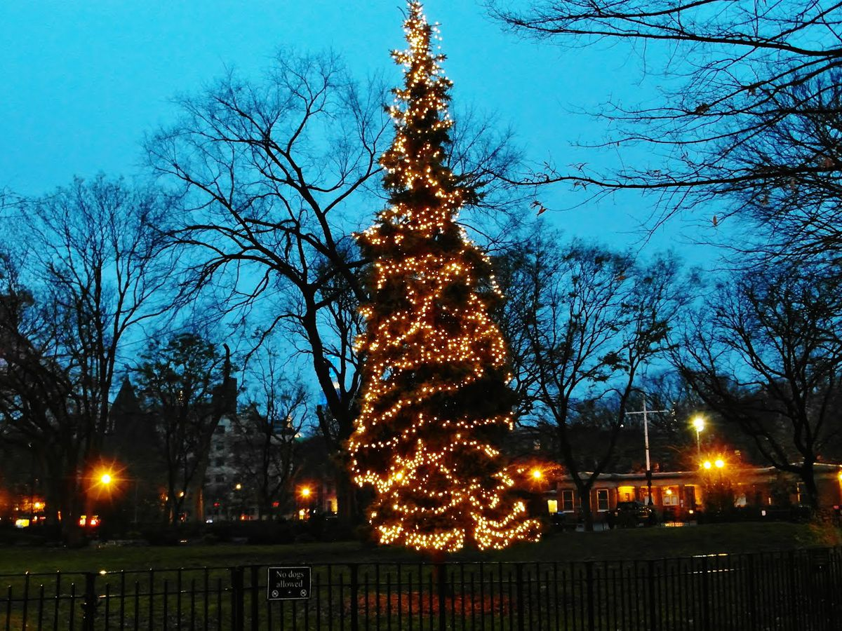 The Tompkins Square Park holiday tree in the evening. The tree is decorated with lights.