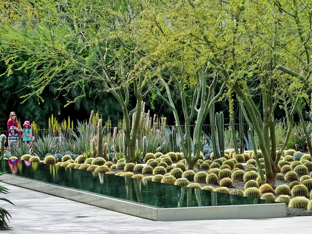 A courtyard with trees, cactii, and plants.