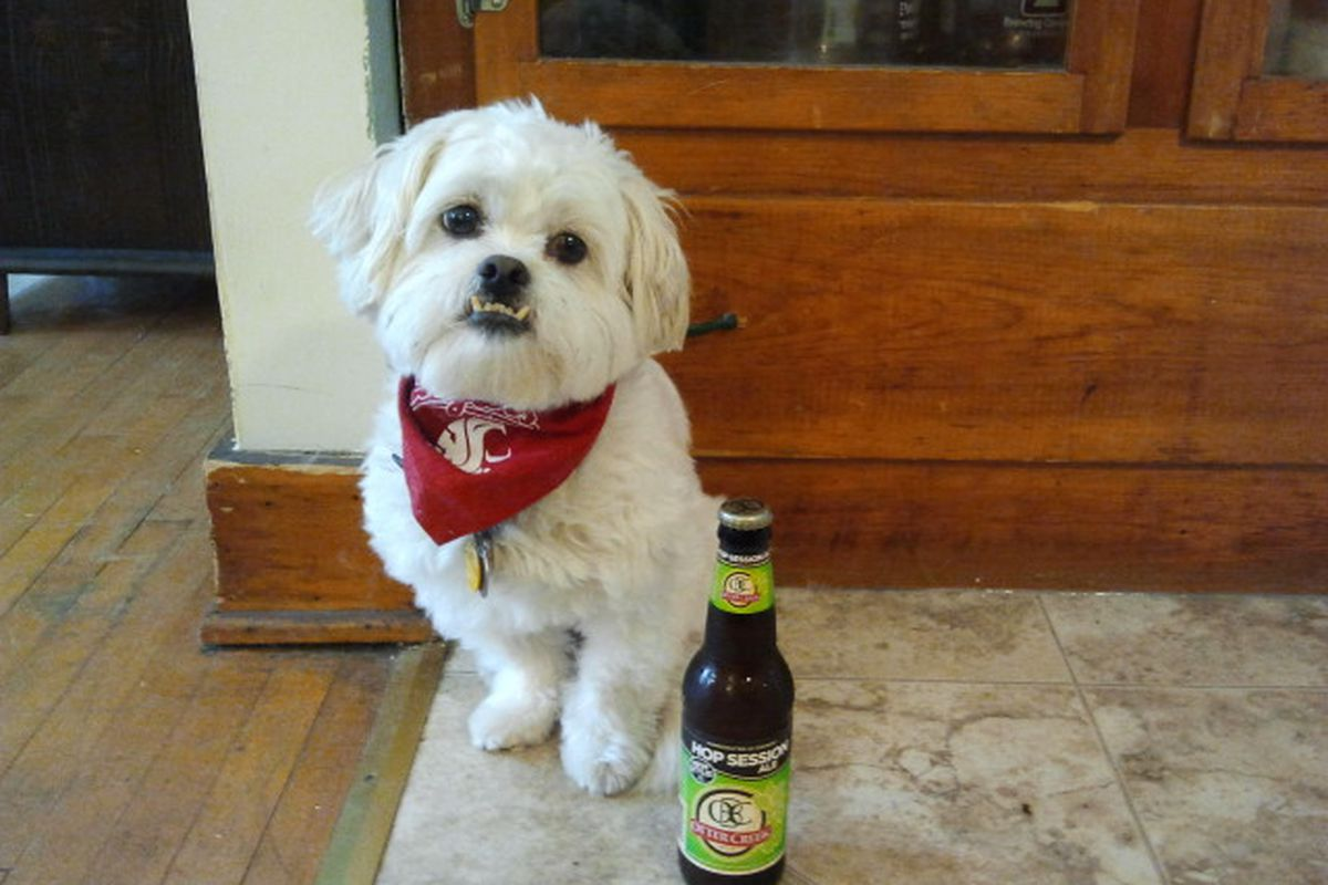 Baxter the Pekapoo needs something a little lighter for a long college football Saturday.