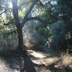 """<span class=""""credit"""">Photo: <a href=""""http://nobodyhikesinla.com/2012/12/11/fryman-canyon-loop/"""" target=""""_blank"""">Nobody Hikes in LA</a></span></br> ↑ <a href=""""http://www.lamountains.com/parks.asp?parkid=15"""" target=""""_blank""""><b>Rainforest Trail, Fryman Cany"""