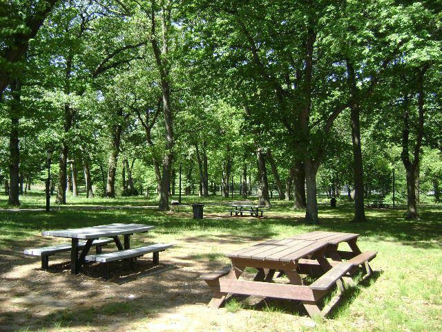 A park. In the foreground are picnic tables and benches. In the distance are multiple trees.