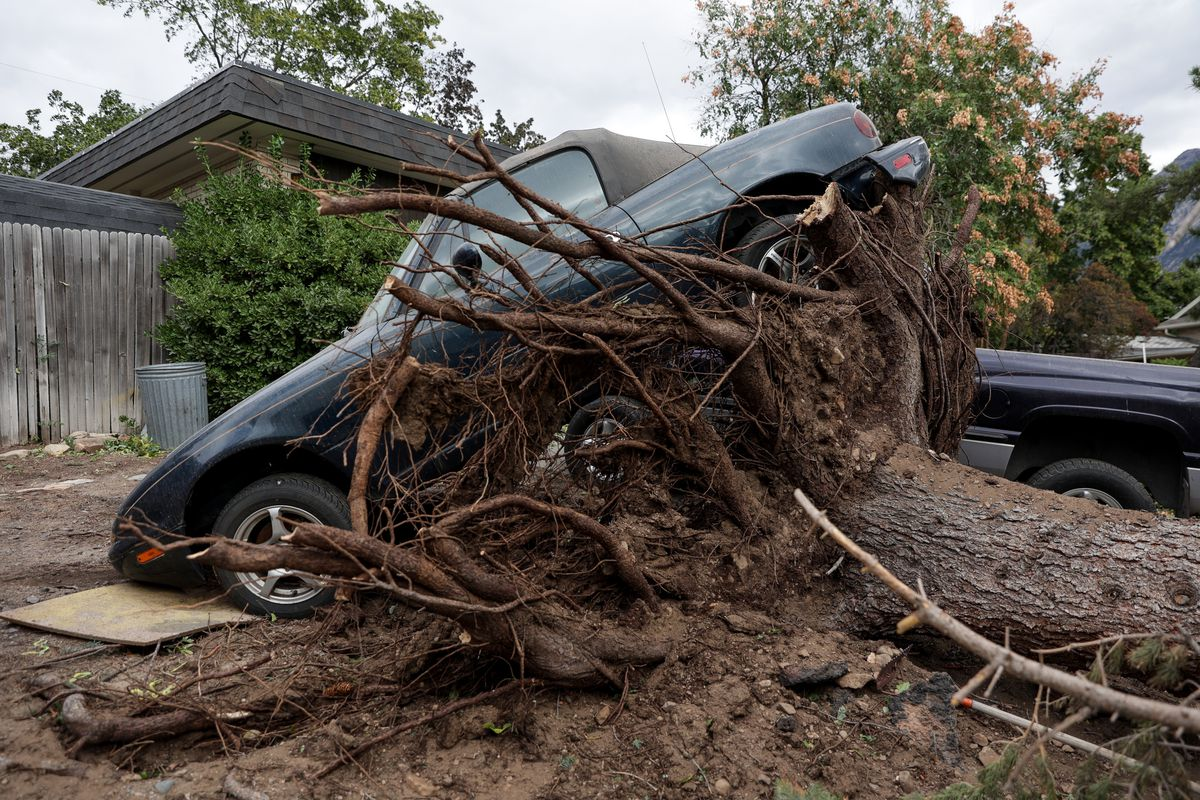 The roots of a tree felled by high winds lifted a car into the air in Millcreek on Tuesday, Sept. 8, 2020.