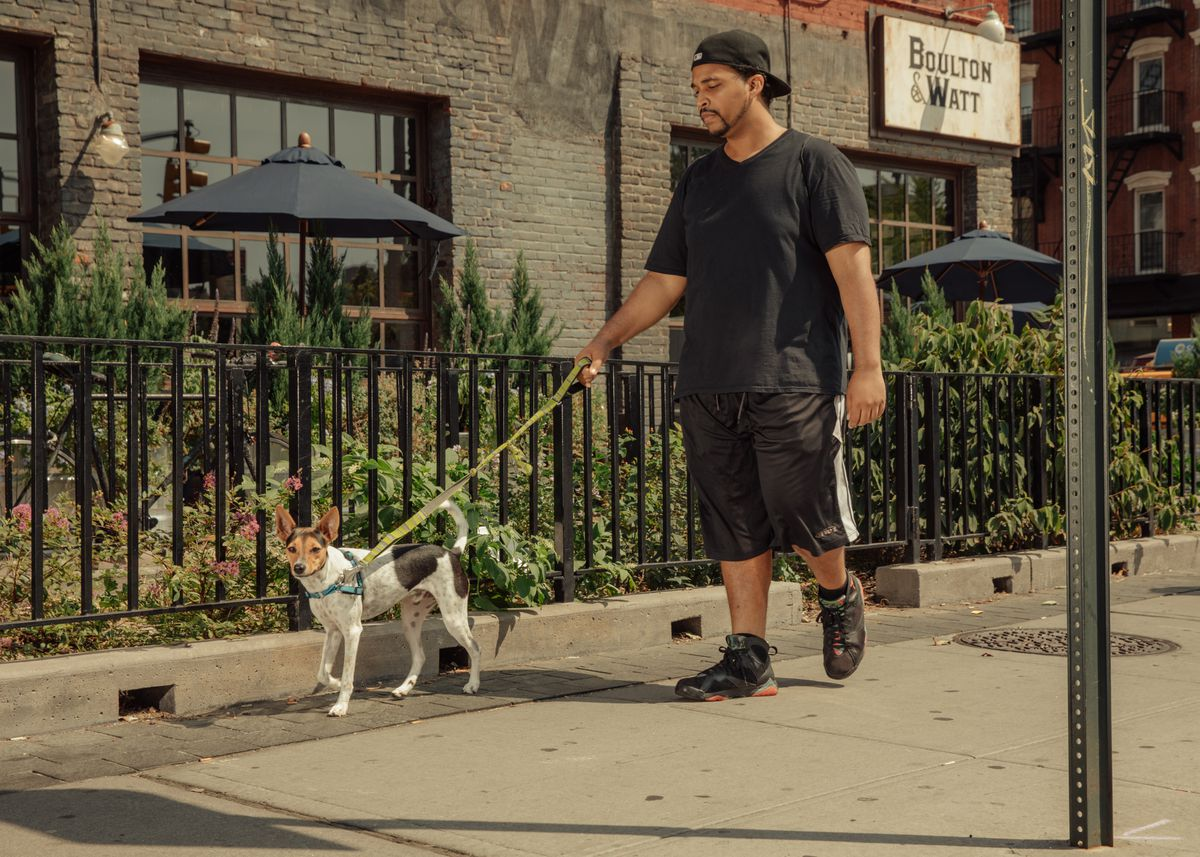 Wag vs  Rover: The pet care startups competing to walk your