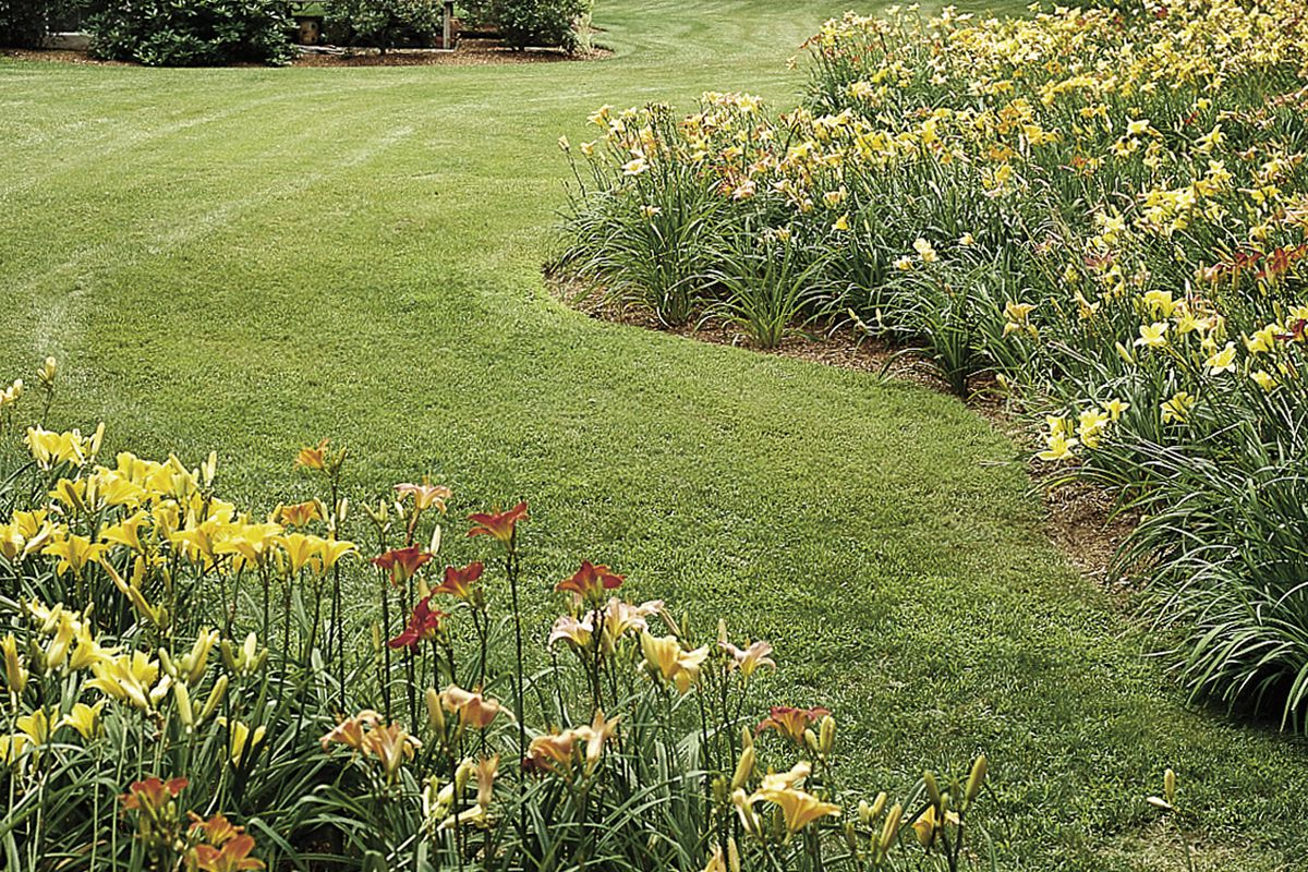How To Divide Daylilies This Old House