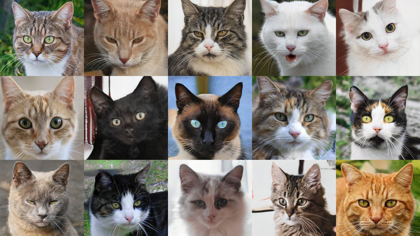 Soon, the internet will make its own cat photos and then it won't need us -  The Verge
