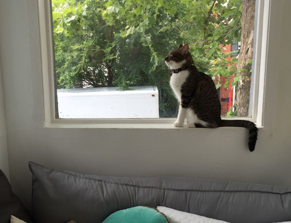 Cat gazing out a window