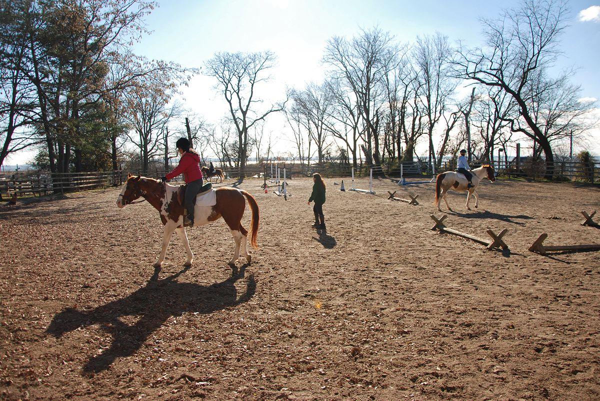 Visiting New York City\'s last horse stables - Curbed NY