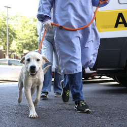 A volunteer walks a dog into PAWS Chicago Medical Center after more than three dozen dogs and cats arrived Wednesday afternoon from shelters in Louisiana in the path of Hurricane Ida.