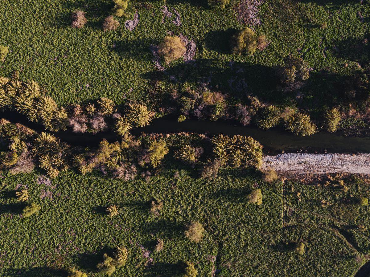LA River With Green Vegetation