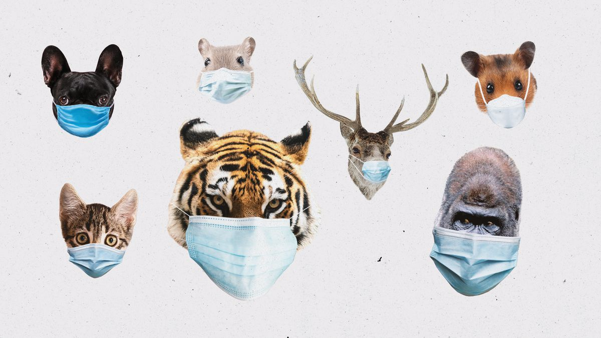 A collage of different animals wearing masks.