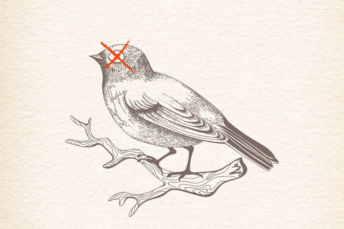 ¿Qué es un pájaro? - Enciclopedia de la Vida
