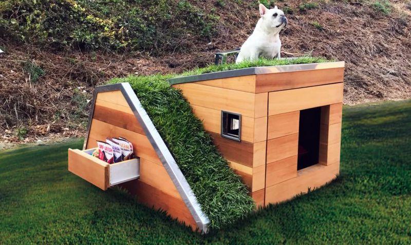 Dog sitting atop dog house
