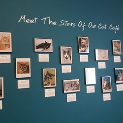 Entering the cat lounge, customers are greeted by a wall of cats.
