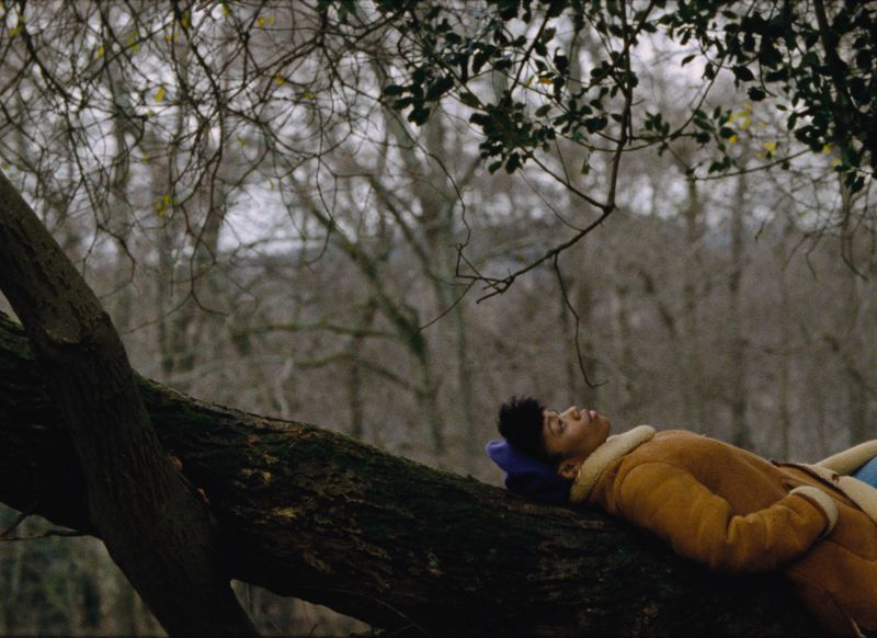 Alicia lays on a tree and looks up at the sky.