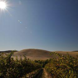 Spring Valley Vineyard, Walla Walla. [Source: Washington State Wine Commission]
