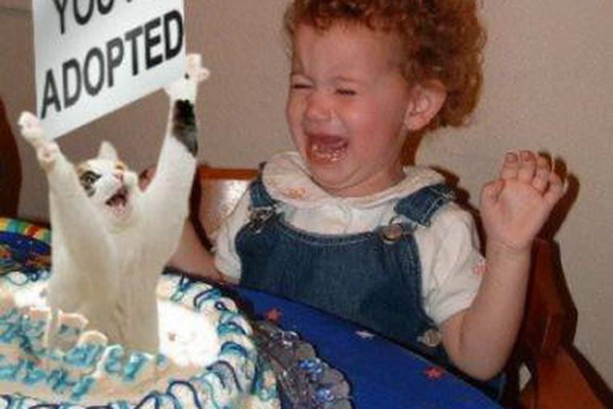 Actual photo from Rock M Nation's birthday party last year. If a cat jumps out of a cake again this year, no one's getting invited next year.