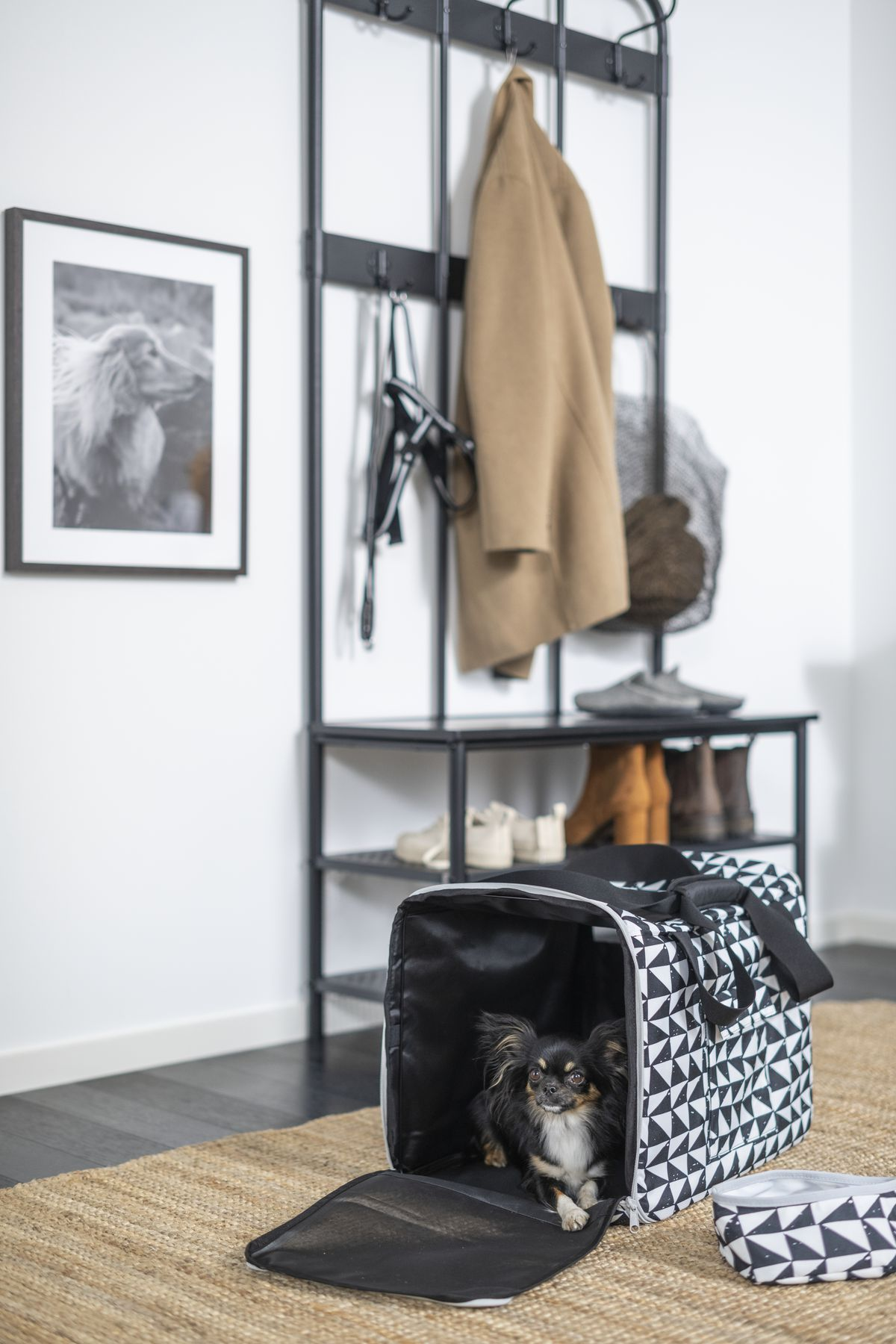 Dog inside a black-and-white patterned carrier.