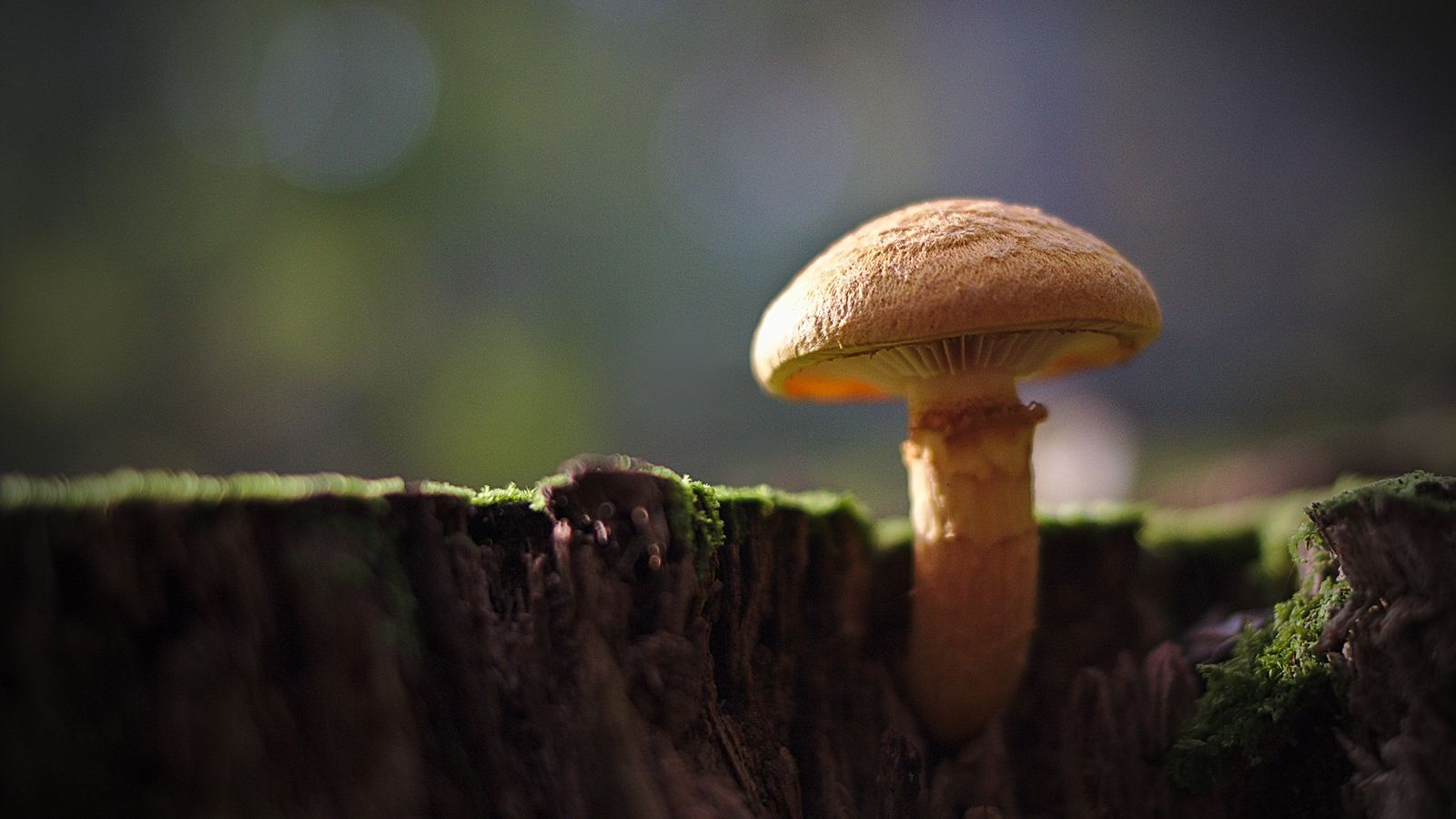 A 'potentially deadly' mushroom-identifying app highlights the dangers of bad AI