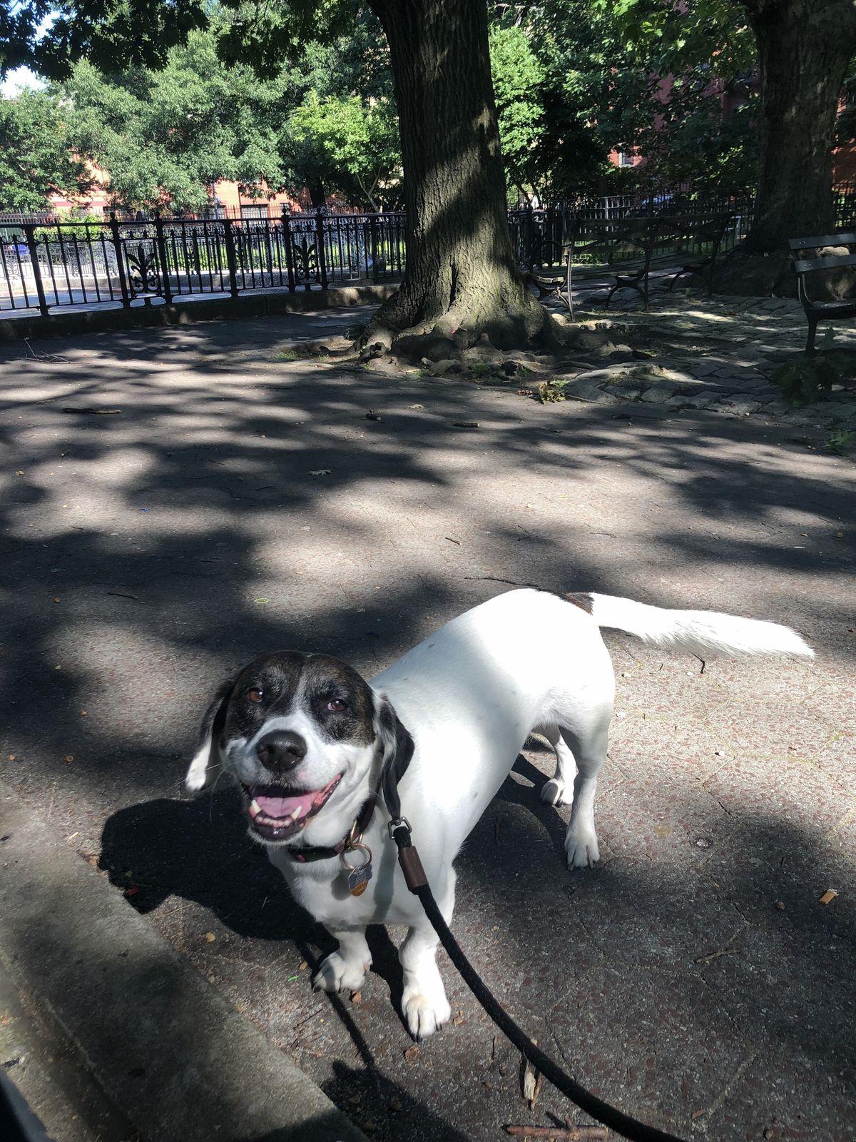 Seth's dog Trudy